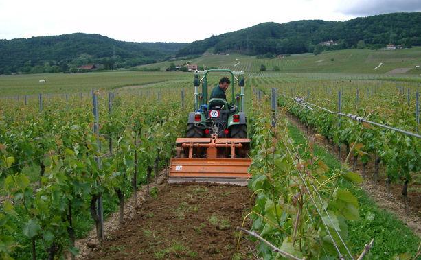 Travaux de la vigne Entretien Domaine de Chantegrive
