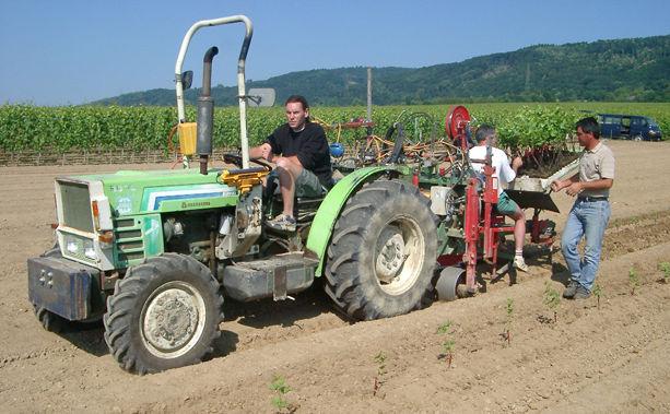 Travaux de la vigne Plantations Domaine de Chantegrive