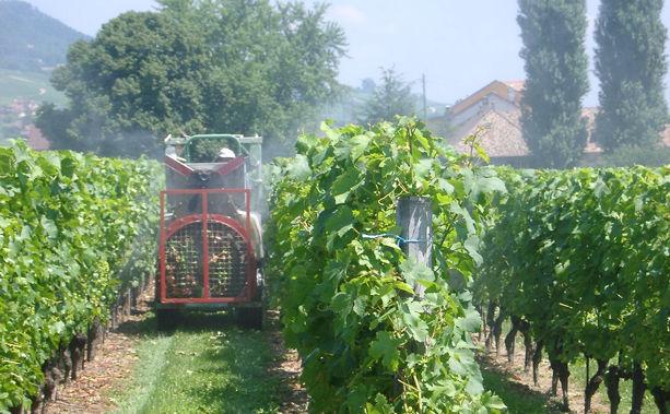 Travaux de la vigne au domaine de chantegrive r gion la c te - Traitement de la vigne ...