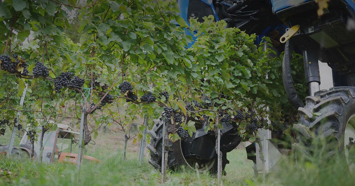 Opengraph Travaux de la Vigne Domaine de Chantegrive